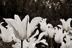 Πτώσεις βροχής σε ένα λουλούδι Στοκ Εικόνες