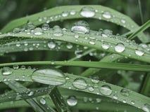 Πτώσεις βροχής σε μια χλόη και τα φύλλα Στοκ Φωτογραφία
