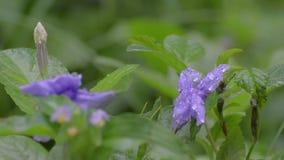 Πτώσεις βροχής στα άγρια λουλούδια απόθεμα βίντεο