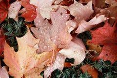 Πτώσεις βροχής στα φύλλα για ένα υπόβαθρο πτώσης στοκ φωτογραφίες