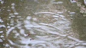Πτώσεις βροχής στην επιφάνεια νερού απόθεμα βίντεο