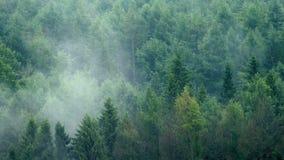Πτώσεις βροχής στο δασικό τοπίο της Misty απόθεμα βίντεο