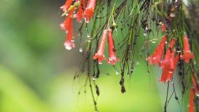 Πτώσεις βροχής στο λουλούδι Στοκ εικόνες με δικαίωμα ελεύθερης χρήσης