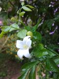 Πτώσεις βροχής στο λουλούδι στοκ φωτογραφία με δικαίωμα ελεύθερης χρήσης