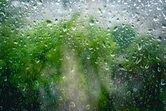 Πτώσεις βροχής στο παράθυρο και το πράσινο δέντρο στο υπόβαθρο στοκ εικόνες