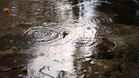 Πτώσεις βροχής απόθεμα βίντεο