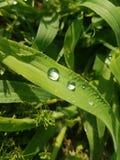 Πτώσεις δροσιάς σε μια λεπίδα της πράσινης χλόης στοκ εικόνα