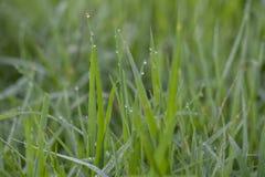 Πτώσεις δροσιάς στα πράσινα φύλλα στοκ φωτογραφία