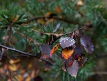 Πτώσεις δροσιάς στα φύλλα φθινοπώρου Στοκ Εικόνες