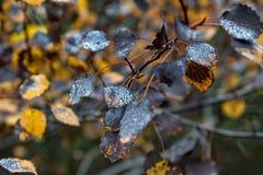 Πτώσεις δροσιάς στα φύλλα φθινοπώρου Στοκ εικόνες με δικαίωμα ελεύθερης χρήσης