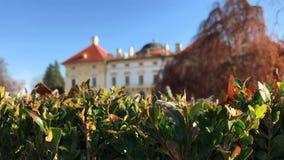 Πτώσεις δροσιάς στο spiderweb στο θάμνο πυξαριού στο κάστρο Austerlitz απόθεμα βίντεο