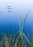 Πτώσεις και το ήρεμο νερό Στοκ Εικόνες