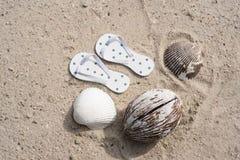 Πτώσεις κτυπήματος και κοχύλια θάλασσας στην παραλία για την έννοια διακοπών Στοκ Εικόνες
