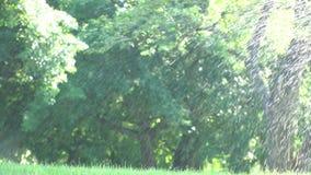 Πτώσεις νερού ραντίσματος ενάντια στη χλόη ποτίσματος ηλιαχτίδων στο πάρκο απόθεμα βίντεο