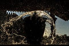 Πτώσεις νερού ραντίσματος στο μαύρο υπόβαθρο Στοκ φωτογραφίες με δικαίωμα ελεύθερης χρήσης