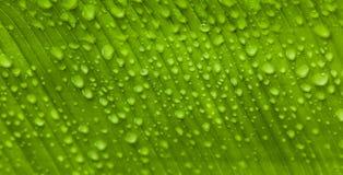 Πτώσεις νερού σε ένα φρέσκο φύλλο Στοκ Εικόνες