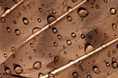 Πτώσεις νερού σε ένα φτερό του πουλιού Στοκ εικόνες με δικαίωμα ελεύθερης χρήσης