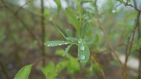 Πτώσεις νερού σε ένα φύλλο φιλμ μικρού μήκους