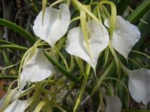 Πτώσεις νερού στα λουλούδια Στοκ εικόνες με δικαίωμα ελεύθερης χρήσης