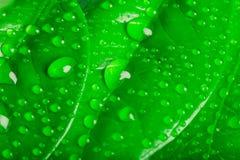 Πτώσεις νερού στα φύλλα Στοκ Εικόνες