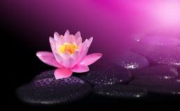 Πτώσεις νερού στις μαύρες πέτρες SPA με το λουλούδι κρίνων Στοκ Εικόνες