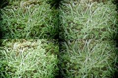 Πτώσεις νερού στο φρέσκο υπόβαθρο χλόης artistc Πράσινη ανασκόπηση χλόης Στοκ εικόνες με δικαίωμα ελεύθερης χρήσης