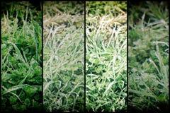 Πτώσεις νερού στο φρέσκο υπόβαθρο χλόης artistc Πράσινη ανασκόπηση χλόης Στοκ Εικόνες