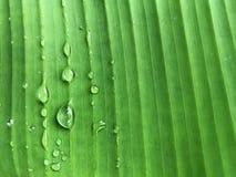 Πτώσεις νερού στο φύλλο μπανανών, φυσικό πράσινο υπόβαθρο Στοκ φωτογραφία με δικαίωμα ελεύθερης χρήσης