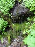 Πτώσεις νερού όπως έναν καταρράκτη από μια mossy κλίση Στοκ Φωτογραφία