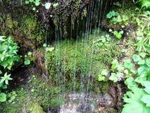 Πτώσεις νερού όπως έναν καταρράκτη από μια mossy κλίση Στοκ φωτογραφία με δικαίωμα ελεύθερης χρήσης