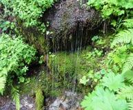 Πτώσεις νερού όπως έναν καταρράκτη από μια mossy κλίση Στοκ Εικόνα