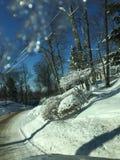 Πτώσεις πάγου και χιονισμένη άκρη του δρόμου δέντρων Στοκ εικόνα με δικαίωμα ελεύθερης χρήσης