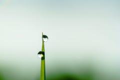 Πτώσεις δροσιάς πρωινού σε μια λεπίδα της χλόης Στοκ φωτογραφία με δικαίωμα ελεύθερης χρήσης