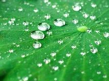 Πτώσεις δροσιάς στην επιφάνεια του πράσινου φύλλου Στοκ Φωτογραφίες