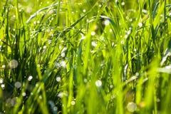 Πτώσεις δροσιάς στην πράσινη χλόη Στοκ φωτογραφία με δικαίωμα ελεύθερης χρήσης
