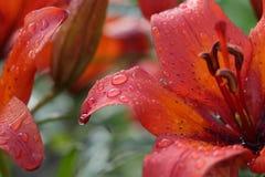 Πτώσεις σε ένα λουλούδι Στοκ φωτογραφία με δικαίωμα ελεύθερης χρήσης