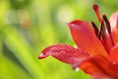Πτώσεις σε ένα λουλούδι Στοκ εικόνα με δικαίωμα ελεύθερης χρήσης