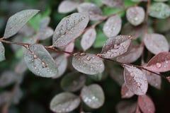 Πτώσεις στα φύλλα Στοκ Εικόνες