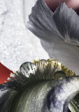 Πτώσεις στο λουλούδι ίριδων Στοκ φωτογραφίες με δικαίωμα ελεύθερης χρήσης