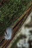 Πτώσεις της βροχής στα φτερά πουλιών Στοκ Φωτογραφίες