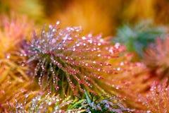 Πτώσεις της δροσιάς στην κίτρινη και κόκκινη χλόη Στοκ Εικόνες