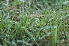 Πτώσεις της δροσιάς στην πράσινη χλόη Στοκ Εικόνες