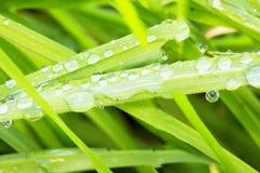 Πτώσεις του νερού πέρα από τις λεπίδες χλόης Στοκ εικόνα με δικαίωμα ελεύθερης χρήσης