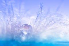 Πτώσεις του νερού σε ένα φτερό πουλιών ` s Ήπια μακροεντολή με ένα φτερό πουλιών με τα μπλε χρώματα Καλλιτεχνική εικόνα με μια μα Στοκ φωτογραφίες με δικαίωμα ελεύθερης χρήσης