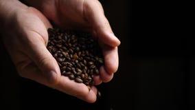 Πτώσεις φασολιών καφέ κάτω από τα χέρια της Farmer απόθεμα βίντεο