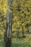 πτώσεις φθινοπώρου Στοκ εικόνα με δικαίωμα ελεύθερης χρήσης