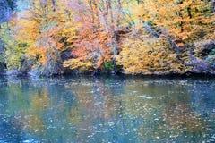 πτώσεις φθινοπώρου Στοκ Εικόνες