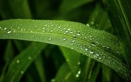 Πτώσεις φύσης και νερού στα φύλλα στοκ εικόνες με δικαίωμα ελεύθερης χρήσης