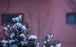 Πτώσεις χιονιού σε ένα έλατο Στοκ Φωτογραφίες