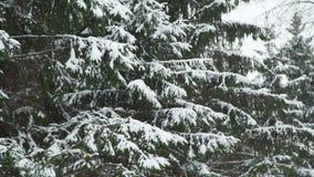 Πτώσεις χιονιού στους κλάδους απόθεμα βίντεο